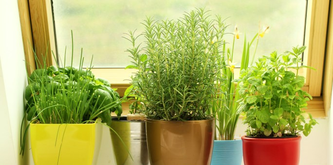 Apartment Gardening - Obernauer Insurance Agency Blog